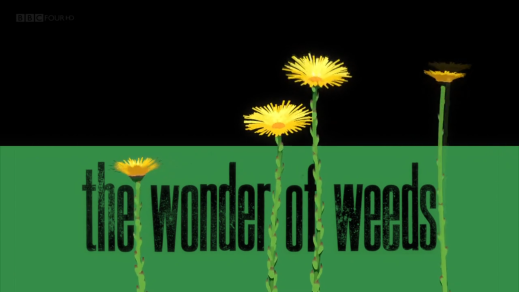 The Wonder of Weeds