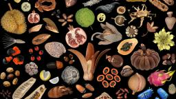 Seeds-and-Fruits-Mix_Credit_Wolfgang_Stuppy_hero_web