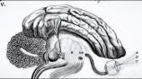 minds-06