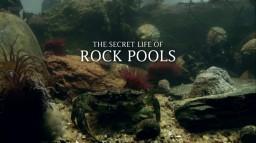 Rock.Pools-05