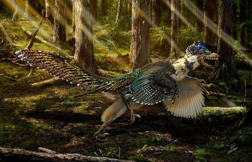 "TO GO WITH AFP STORY BY MARIETTE LE ROUX - An handout artist impression released on July 15, 2015 by Ministry of Land and Resources of China shows a reconstruction of the new short-armed and winged feathered dinosaur Zhenyuanlong suni from the Early Cretaceous (ca. 125 million years ago) of China. Depicted by movie-makers as mean, green, man-eating lizards covered in scales, velociraptors probably looked more like large, toothy turkeys, a study said on July 16. Close study of a newly-discovered cousin dubbed Zhenyuanlong suni, has revealed that velociraptors likely had large wings and feathery coats, according to research published in the journal Scientific Reports. AFP PHOTO / Ministry of Land and Resources of China / Chuang Zhao = RESTRICTED TO EDITORIAL USE - MANDATORY CREDIT ""AFP PHOTO / Ministry of Land and Resources of China / Chuang Zhao - NO MARKETING NO ADVERTISING CAMPAIGNS - DISTRIBUTED AS A SERVICE TO CLIENTS =Chuang Zhao/AFP/Getty Images"