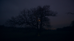 Oak Tree (4)