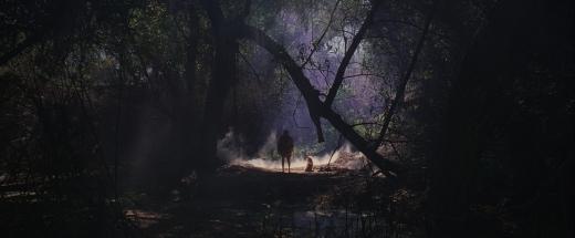 kuso-SMEAR-forest-still01
