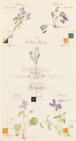 Violblommor med riktlinjer, 1919 Akvarell, bl�, blyerts och metallf� p�apper 50 �26,8 cm HAK457 � Stiftelsen Hilma af Klints Verk
